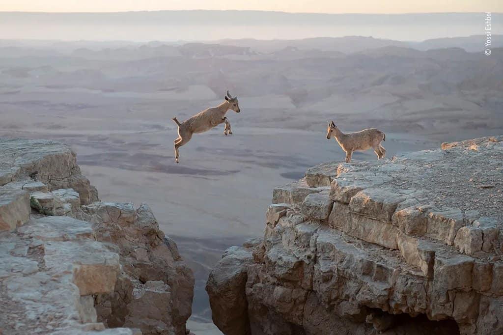 تعرّف الصور المذهلة والتي حازت جائزة مصور الحياة البرية لعام 2020